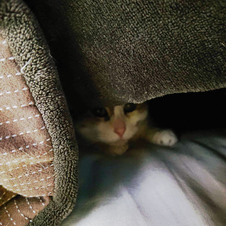 猫様 こたつ