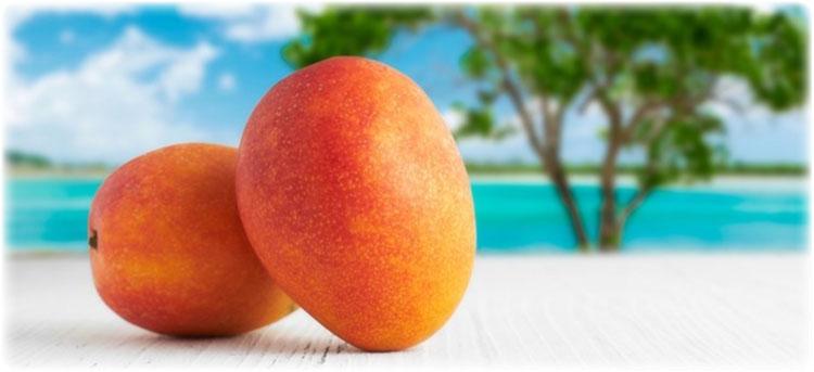 マンゴー商品