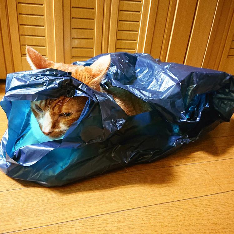 ビニール袋の中でまったり猫