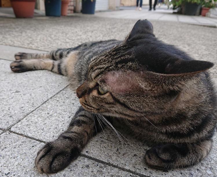 オマケ 本日の猫様